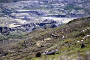 Helens-Landscape