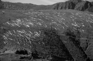 Saint Helens Dead Trees